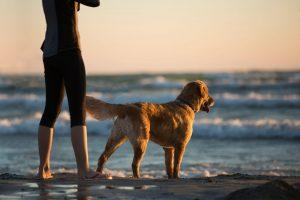 A dog and a man taking a walk on the beach.